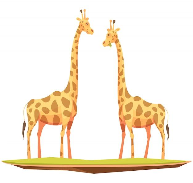 Casal de girafa