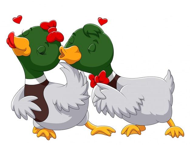 Casal pato apaixonado e beijando