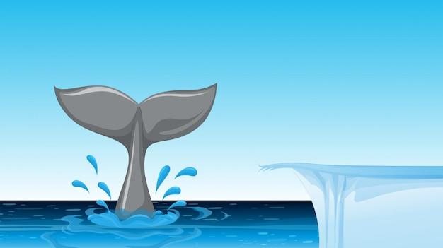 Cauda de baleia no oceano