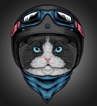 Cavaleiro do cat