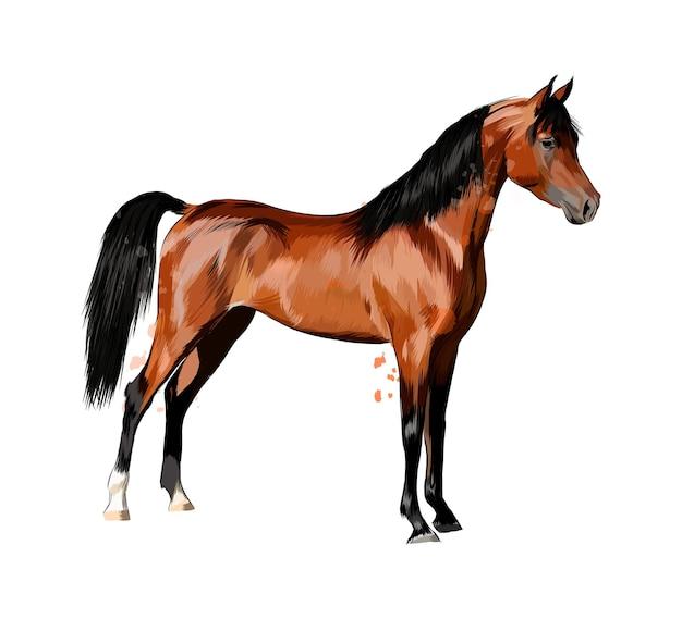 Cavalo de respingos de aquarelas. esboço desenhado de mão.
