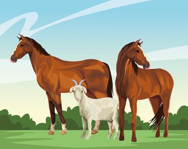 Cavalo e cabra