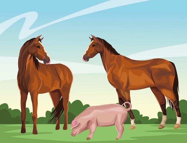 Cavalo e porco