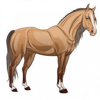 Cavalo em pé