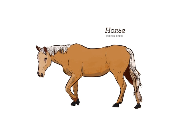 Cavalo, mão desenhar desenho vetorial.