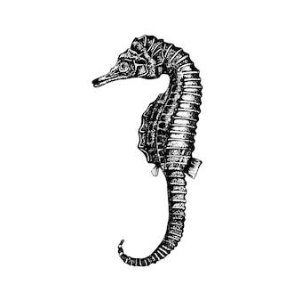 Cavalo-marinho desenhado à mão