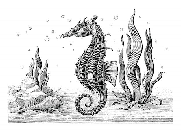 Cavalo-marinho mão desenho ilustração gravura vintage