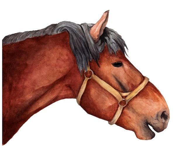 Cavalo marrom em aquarela de perfil com freio