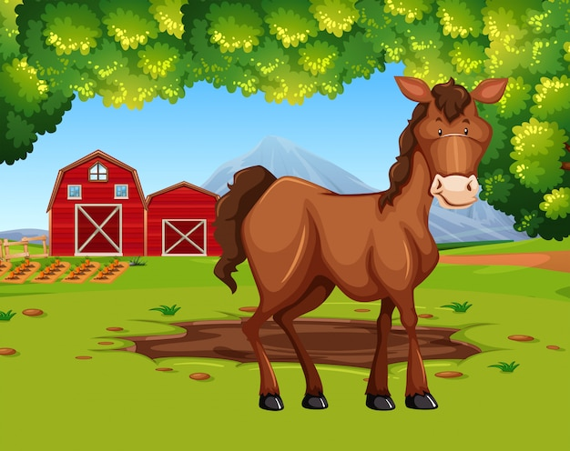 Cavalo na terra