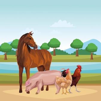 Cavalo porco galinha e galo