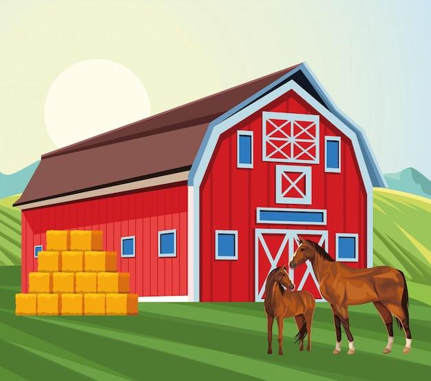 Cavalos de celeiro e fardos de fazenda de campo de feno
