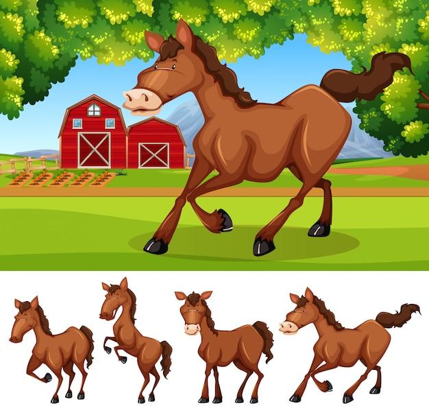 Cavalos na terra