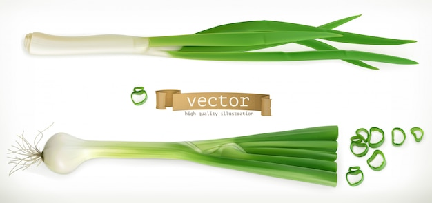 Cebola verde. 3d vegetal.