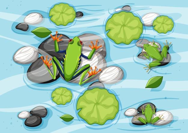 Cena aérea com sapos e folhas de lótus na lagoa