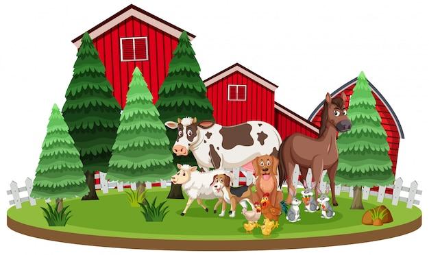 Cena com animais de fazenda em pé na frente dos celeiros
