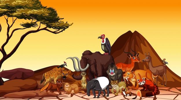 Cena com animais no campo de savana