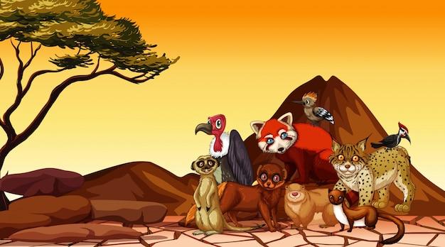 Cena com animais selvagens no campo de savana