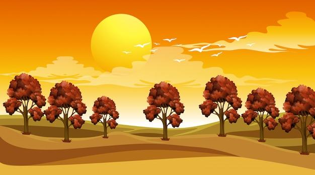 Cena com árvores no campo ao pôr do sol