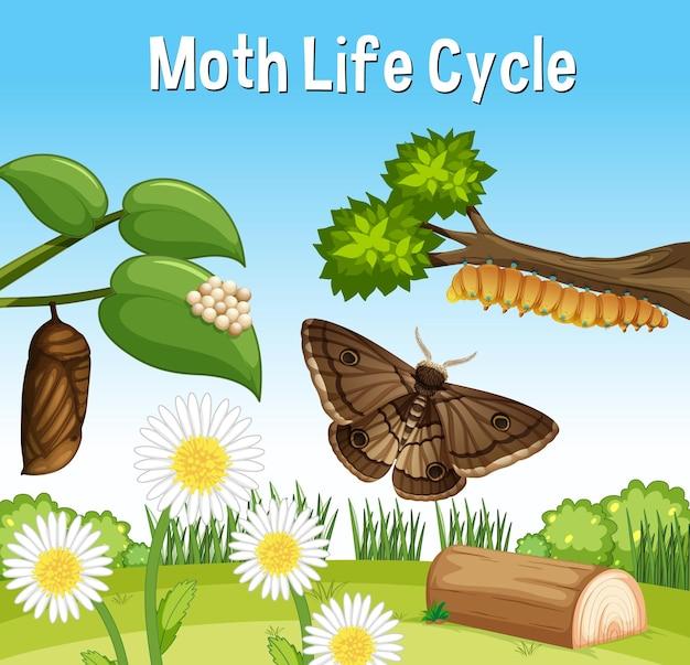 Cena com ciclo de vida da mariposa