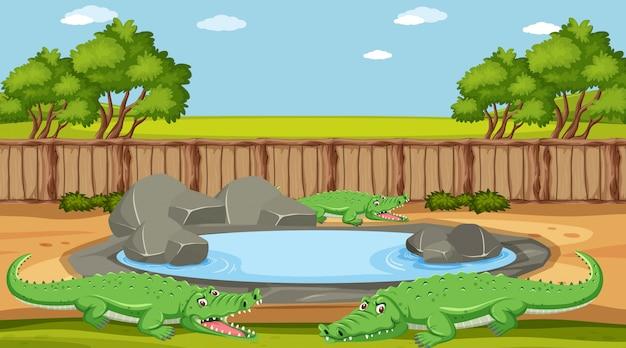 Cena com crocodilo à beira da lagoa no zoológico