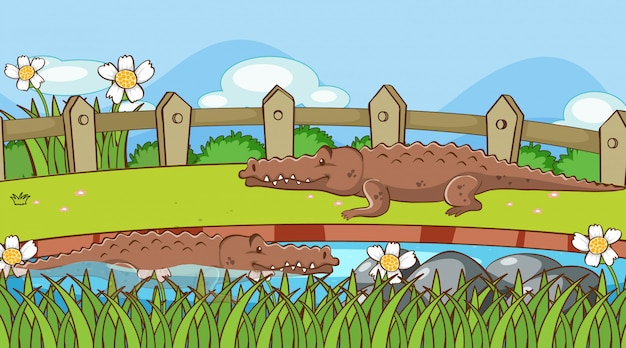 Cena com crocodilos no parque