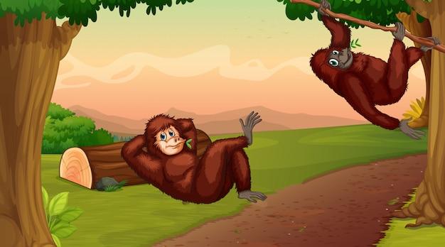Cena com dois chimpanzés subindo em árvore