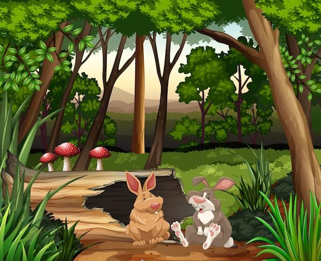 Cena, com, dois, coelhos, em, floresta