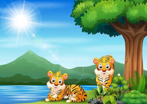 Cena com dois tigres à beira do rio