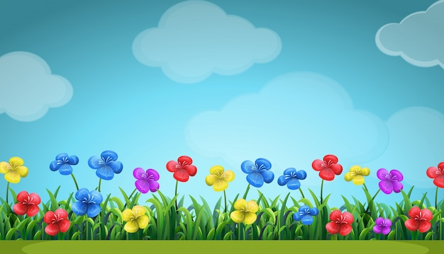 Cena com flores coloridas no campo