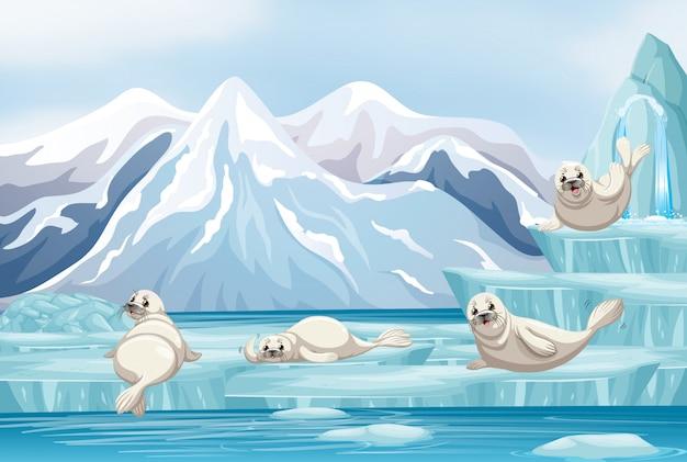 Cena com focas brancas no gelo