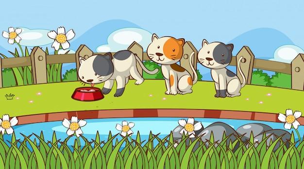 Cena com gatinhos fofos no jardim