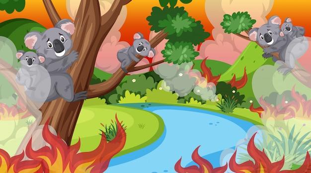 Cena com grande incêndio na floresta cheia de coalas