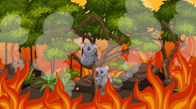 Cena com grandes incêndios florestais e coalas presos na floresta
