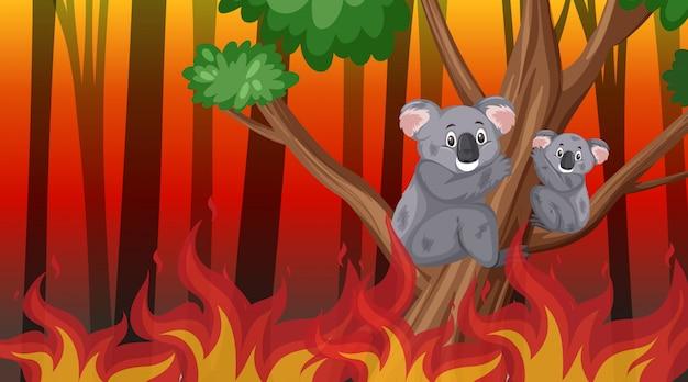 Cena com grandes incêndios queimando árvores e coalas na floresta