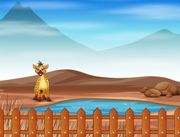 Cena com hiena vivendo na savana