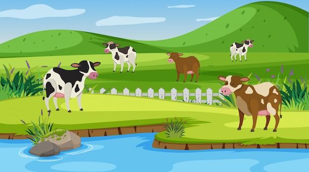 Cena com muitas vacas na fazenda