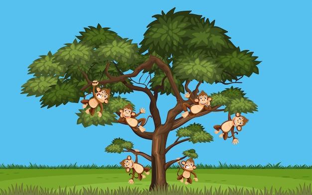 Cena com muitos macacos pendurados na árvore
