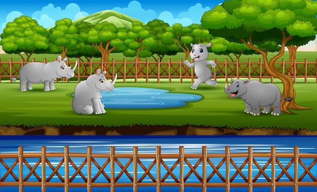 Cena com muitos rinocerontes brincando na gaiola aberta do zoológico
