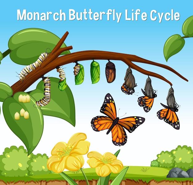 Cena com o ciclo de vida da borboleta monarca