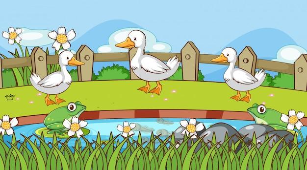 Cena com patos e sapos à beira da lagoa