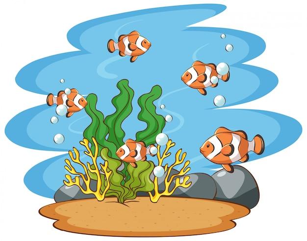 Cena com peixe-palhaço no mar