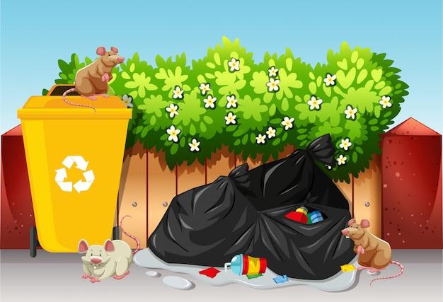 Cena, com, sacolas lixo, e, ratos