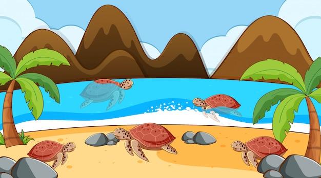 Cena com tartarugas marinhas nadando no mar