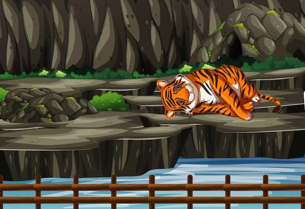 Cena com tigre no zoológico