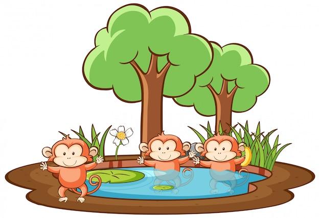 Cena com três macacos no parque