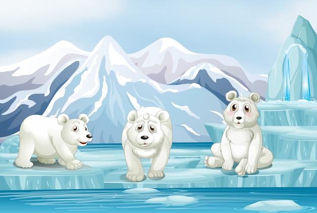 Cena com três ursos polares no gelo