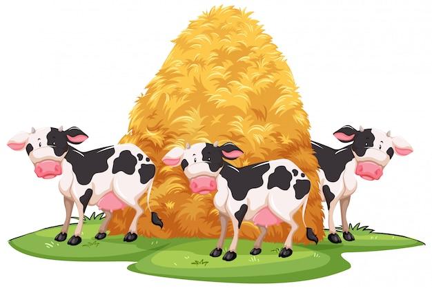 Cena com três vacas e pilha de feno