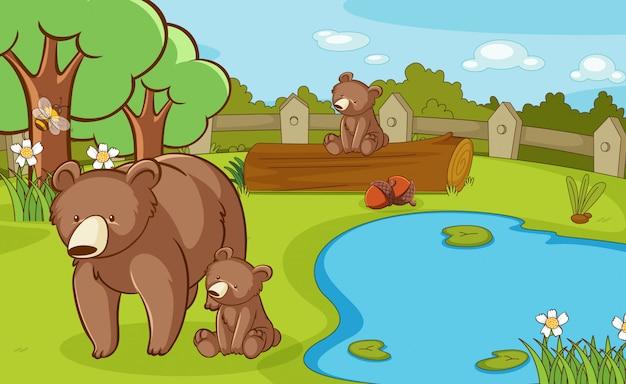 Cena com ursos pardos no parque