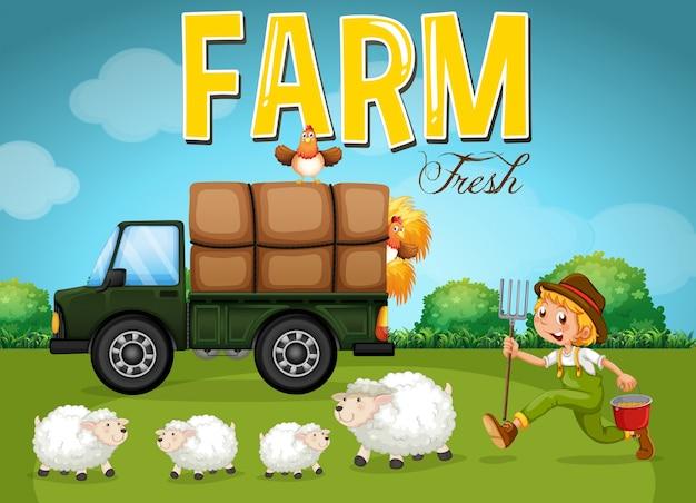 Cena da fazenda com agricultor e ovelhas