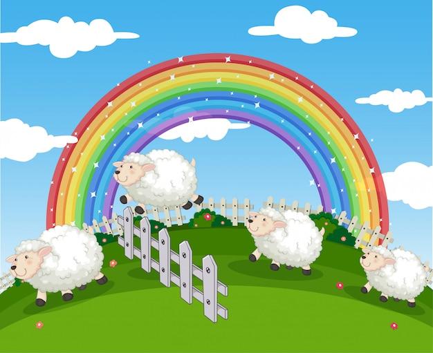 Cena da fazenda com ovelhas e arco-íris
